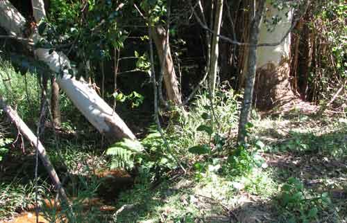 natural-bush-crowsash